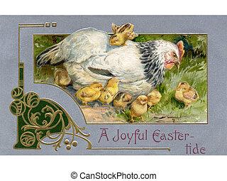 uno, vendemmia, pasqua, cartolina, di, uno, gallina, e, pulcini