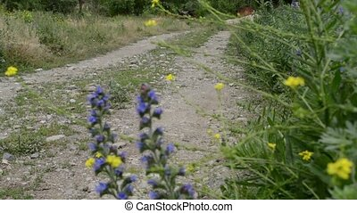 Unpaved Country Road - A village country road, with blue...
