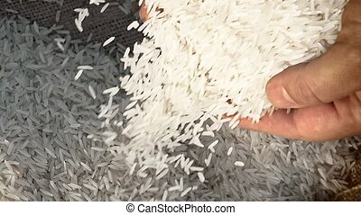 Unprocessed rice being poured from a man's hands. slow...
