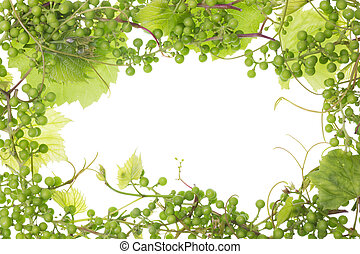 unripe sour green grapes frame - Frame background of unripe...