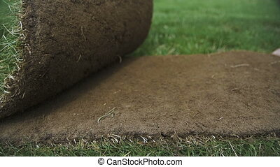 Unrolling Sod for a New Lawn. Turf