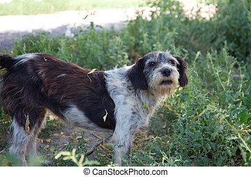unterstand, alter hund, abkommen, abirren, sich entfernen, richtung ändern, sich unterscheiden