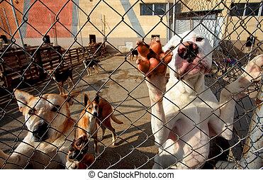 unterstand, aufmerksamkeit, betteln, hunden