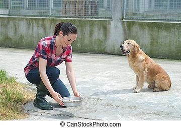 unterstand, fütterung, hunden, tier, freiwilliger