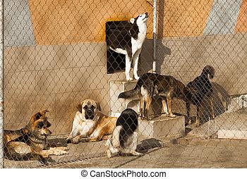 unterstand, hunden, wohnungslose