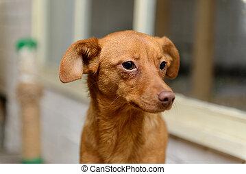 Unterstand, junger Hund, wohnungslose