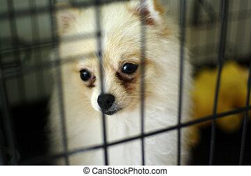 unterstand, käfig, hund