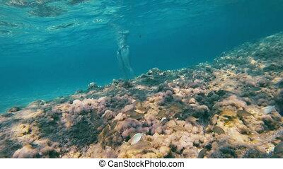unterwasser springen, fische, 4k, scuba