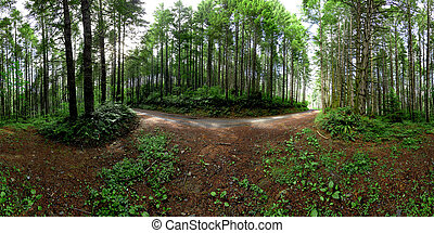 Untouched logging road - A logging forest. 360x180 panorama