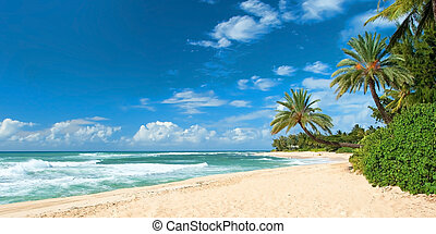 Untouched sandy beach with palms trees and azure ocean in ...