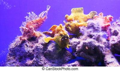Unusual fish of the Red Sea in the aquarium. Underwater life