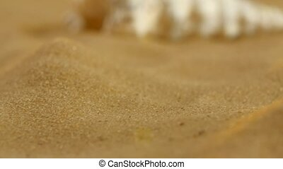 Unusual ocean shell, white, on sand, back light, close up, rotation, dynamic change of focus