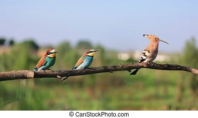 unusual wild birds sit on a branch and sing , unique wildlife shots