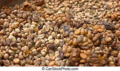 Unwashed Coffee Beans from the Stool of Civet Cats for Kopi...