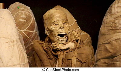 Unwrapped Ican Mummy at Leymebamba Museum, Peru - Medium...