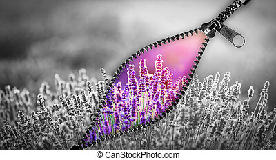 Unzip a way to colorful, positive world. Lavender flowers.