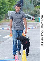 uomo, addestramento, cane