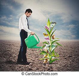 uomo affari, pianta, irrigazione, soldi