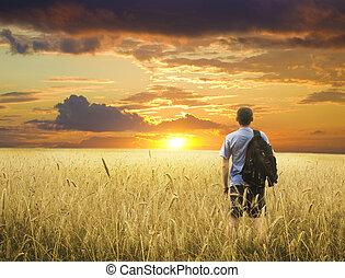 uomo, in, campo frumento