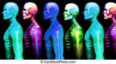 uomo, osso