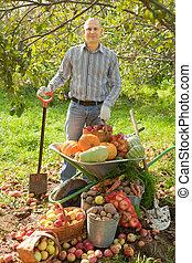 uomo, raccogliere, verdura