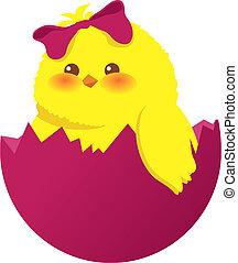 uovo di pasqua, pulcino