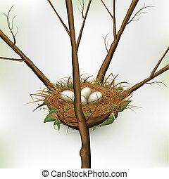 uovo, in, nido