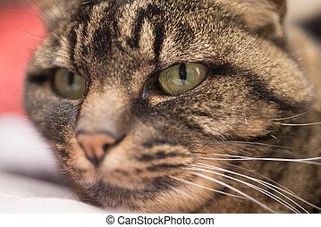 Up close portrait of a cat.
