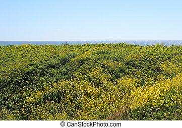 Uphill grass field