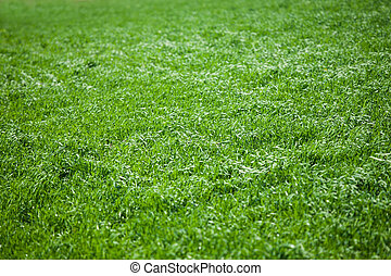 uppe, frisk, gräs, nära, fjäder