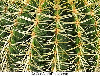 uppe., gyllene, echinocactus, grusonii, nära, pipa kaktus