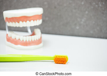 Upper and lower jaw dental model with toothbrush