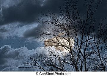 uppstå, bak, fyllda, träd, måne