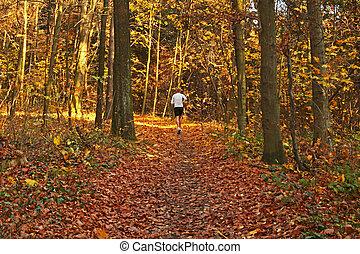 uprawiający jogging, las