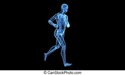 uprawiający jogging, -, przeźroczysty, rentgenowski
