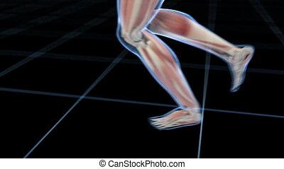 uprawiający jogging, samiec