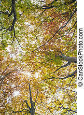 Uprisen view of Autumn Leaves tree branch