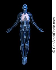 uprising human body - 3d rendered illustration of a...