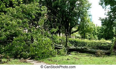 Uprooted Trees after Heavy Storm in Germany, Dusseldorf
