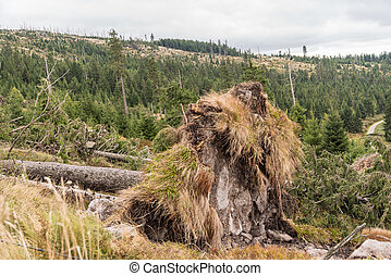 uprooted trees - environmental damage