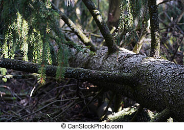 Fallen tree in the forest. Forest landscape.