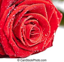 ups, rosa, rosso, chiudere