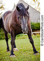 Upset horse in nature ready to charge the photographer