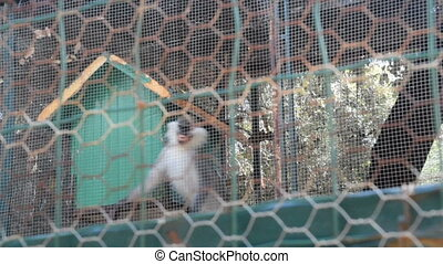 upset monkey in a cage