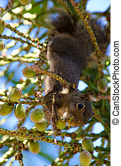 Upside-down squirrel (portrait)