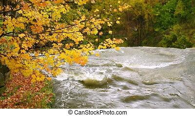 Upstream of Brandywine Falls Loop