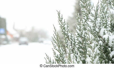 roadside pine tree covered in snow - uptown roadside pine ...