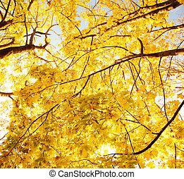 Upward view of fall trees