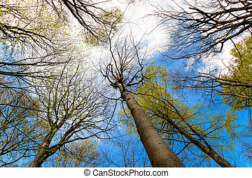 Upward View of Trees in a Forest and Blue Sky