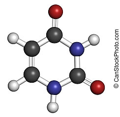 Uracil (U) nucleobase molecule. Present in ribonucleic acid (RNA). Atoms are represented as spheres with conventional color coding: hydrogen (white), carbon (grey), oxygen (red), nitrogen (blue).